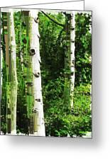 Aspen Grove 2 Greeting Card