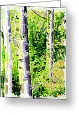 Aspen Grove 6 Greeting Card