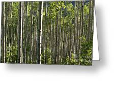 Aspen Grove Along Independence Pass II 2009 Greeting Card