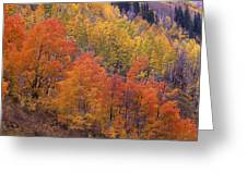 Aspen Grove In Fall Colors Greeting Card