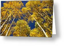 Aspen Grove In Fall Greeting Card