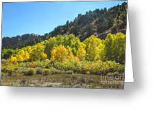 Aspen Grove In The Fall Greeting Card