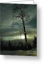 Aspen In Moonlight Greeting Card