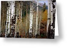 Aspen In The Rockies Greeting Card