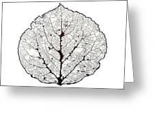 Aspen Leaf Skeleton 1 Greeting Card