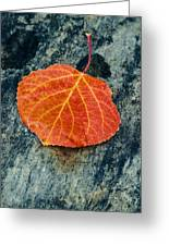 Aspen Leaf  Greeting Card
