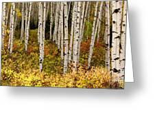 Aspen Panoramic Greeting Card