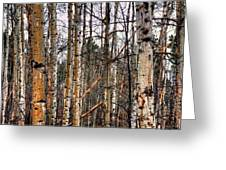 Aspen Patterns 14438 Greeting Card