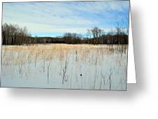 Aspen Prairie 2 Greeting Card