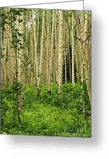Aspen Summer Greeting Card