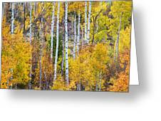 Aspen Tree Magic Greeting Card