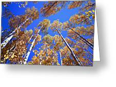 Aspen Tree Tops Greeting Card