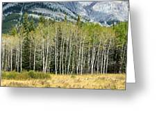 Aspen Trees Along The Bow Valley Greeting Card