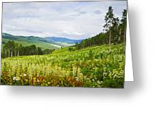 Aspen Trees And Wildflowers Greeting Card