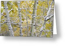 Aspen Trees Covered With Snow Greeting Card