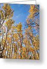 Aspen Trees In The Fall Greeting Card