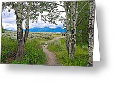 Aspen Trees On Trail To Jackson Lake At Willow Flats Overlook In Grand Teton National Park-wyoming  Greeting Card
