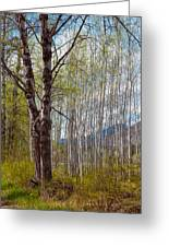 Aspen Trees Proudly Standing Greeting Card by Omaste Witkowski