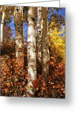 Aspen Trunks And Red Greeting Card