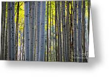 Aspen Trunks Greeting Card by Inge Johnsson
