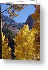 Aspen Viewing Greeting Card