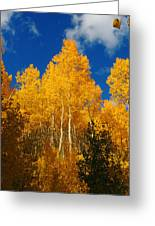 aspen WOW Greeting Card