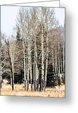 Aspens 2 Greeting Card