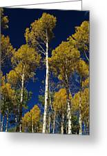 Aspens Against Blue Sky Greeting Card