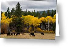 Aspens And Cows Greeting Card