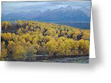 Aspens And The Tetons Greeting Card