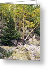 Aspens From Rocks Greeting Card