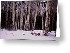Aspens In Snow Greeting Card