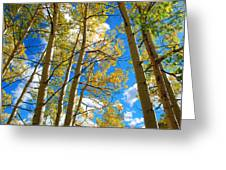 Aspens In The Clouds Greeting Card