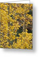 Aspens In The Fall 1 Greeting Card