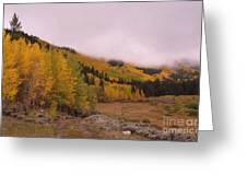 Aspens In The Mist Greeting Card