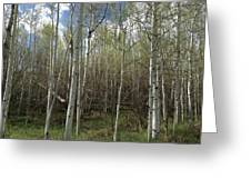 Aspens In The Springtime Greeting Card