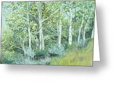 Aspens Of Medicine Bow Greeting Card