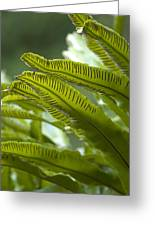 Asplenium Scolopendrium Greeting Card by Science Photo Library