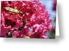 Assassin Bug Greeting Card