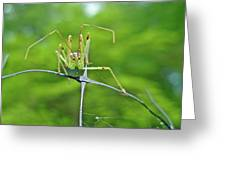 Assassin Bug Nymph - Reduviidae Greeting Card