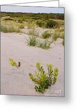 Assateague Dunes 2 Greeting Card