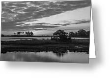 Assateague Salt Marsh Bw Greeting Card