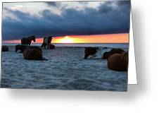 Assateague Sunrise Greeting Card