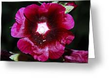 Assorted Flower 004 Greeting Card