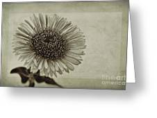 Aster With Textures Greeting Card