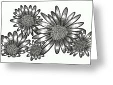 Asteraceae Greeting Card