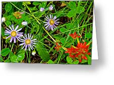 Asters And Scarlet Paintbrush On Swan Lake Trail In Grand Teton National Park-wyoming  Greeting Card