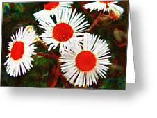 Asters Bright And Bold Greeting Card