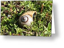 At A Snail's Pace Greeting Card