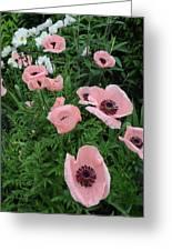 At Bridge Of Flowers  --  Massachusetts  Greeting Card